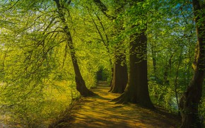 Picture greens, summer, leaves, light, trees, branches, Park, shore, foliage, spring, green, alley, path, pond, crown