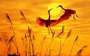 Picture the sun, birds, nature, жаравли