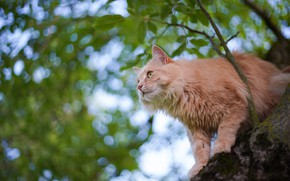 Picture cat, cat, tree, on the tree, cat