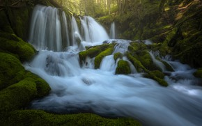 Picture greens, forest, roots, river, stones, waterfall, moss, stream, waterfalls, cascade, mossy
