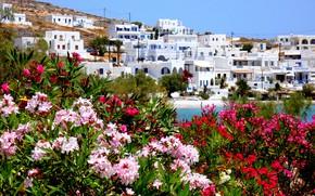 Picture sea, landscape, village, home, Greece, the bushes, oleander, Karavostasi