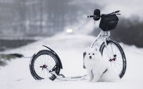 Picture winter, road, snow, nature, dog, white, bag, sitting, bokeh, scooter, Spitz