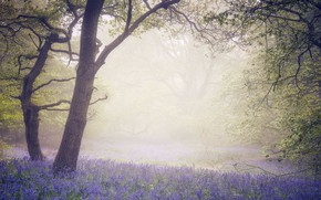 Picture flowers, fog, tree, spring, morning