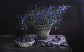 Wallpaper flowers, the dark background, blue, pitcher, still life, blue, cornflowers, drain