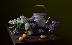 Picture kettle, lilac, apricots