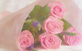 Picture flowers, roses, bouquet, pink, lie