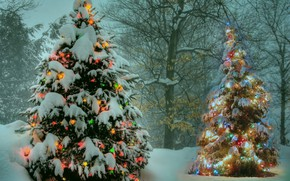Picture winter, Park, tree, garland