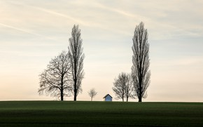 Picture field, house, tree