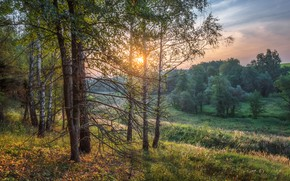 Wallpaper field, autumn, forest, the sky, the sun, light, trees, branches, dal, the evening, haze, birch, ...