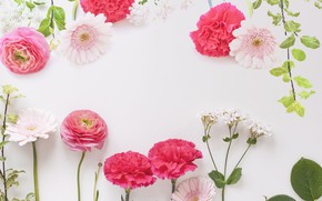 Picture flowers, background, gerbera, Buttercup