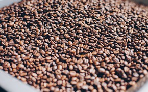 Picture Grain, Coffee, A bunch, A lot, Coffee beans, Coffee, Close-up, Grain, Grains, Roasted, Pile, Close-Up, …
