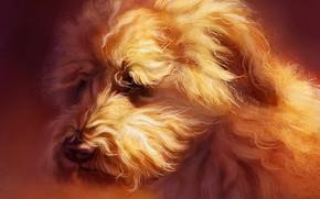 Picture dog, wheaten Terrier, by Pixxus