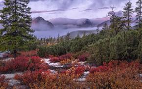 Picture autumn, trees, landscape, mountains, nature, fog, vegetation, shrubs, Vladimir Ryabkov, Kolyma