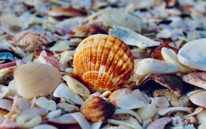 Picture beach, summer, nature, shell
