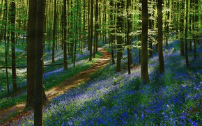 Picture forest, flowers, spring, path