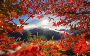 Picture autumn, leaves, mountains, branches, Taiwan, Taiwan, Taichung, Taichung, Ферма У-Лин, Wuling Farm