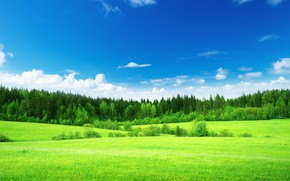 Picture field, forest, summer, landscape, meadow flowers, лужОК