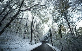 Picture Winter, Snow, Forest, Road, Forest, Winter, Road, Snow