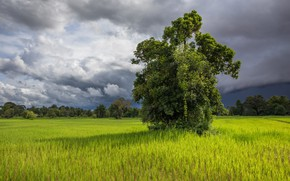 Picture field, grass, clouds, tree