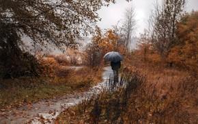 Picture autumn, rain, people