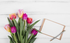 Picture flowers, colorful, tulips, wood, flowers, tulips, spring