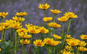 Wallpaper field, summer, flowers