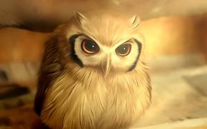 Picture owl, bird, blurred background