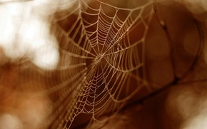 Picture forest, garden, sepia, spider web, shadows and light