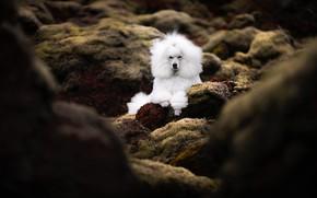 Picture nature, stones, dog