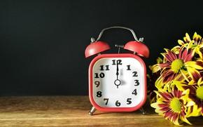 Picture flowers, bouquet, chrysanthemum, Alarm clock