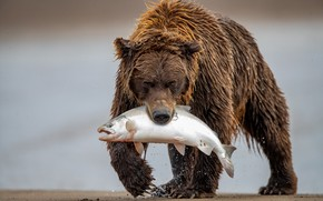 Picture fish, bear, mining