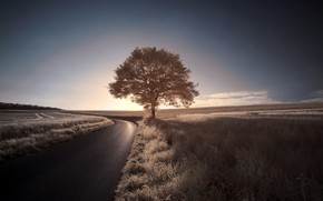 Picture road, the sky, tree