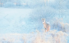 Picture winter, snow, nature, rendering, treatment, deer, ROE, photoart