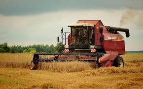 Picture field, the evening, harvester, harvesting, осенняя страда