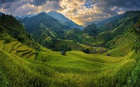 Picture mountains, field, valley, Vietnam