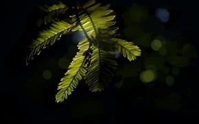 Picture leaves, the dark background, bokeh