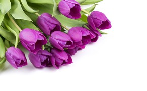 Picture flowers, bouquet, spring, tulips