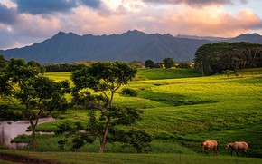 Picture greens, field, trees, nature, horses, horse, pasture, meadow