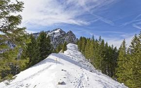 Picture winter, landscape, nature, beauty