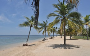 Picture sea, beach, palm trees, Nature