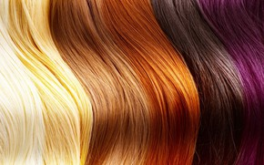 Picture hair, human, different shades
