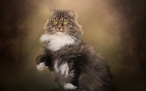 Picture cat, background, stump, fluffy, foot, cat
