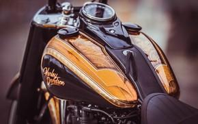 Picture Harley Davidson, Harley-Davidson, Macro, Motorcycle