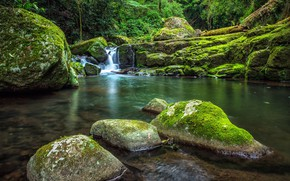 Picture forest, trees, nature, stones, waterfall, moss, Australia, West Canungra Creek Circuit