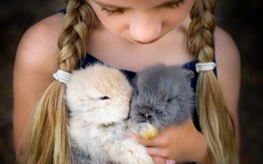 Picture mood, girl, rabbits