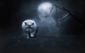 Picture cat, grass, cat, look, night, branches, nature, pose, fog, darkness, fear, fantasy, tree, darkness, the …