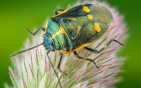 Picture macro, green, background, plant, beetle, fluff, insect, bug, bug