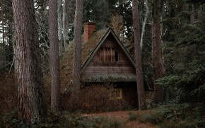Picture forest, trees, nature, house, house, wilderness