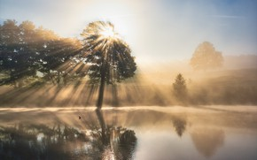 Picture the sun, fog, river, tree, morning