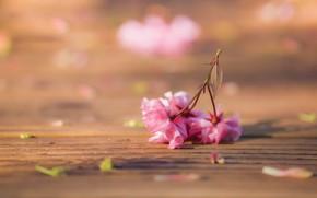Picture blur, Sakura, flowers
